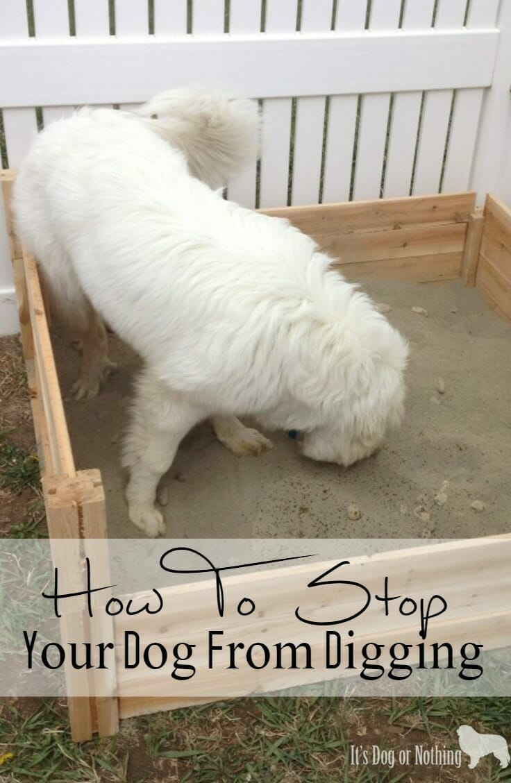 How To Stop Your Dog From Digging