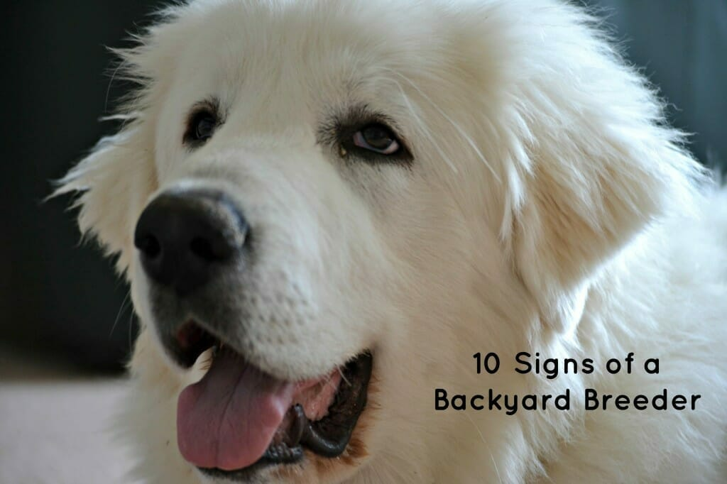 10 Signs of a Backyard Breeder - It's Dog Or Nothing