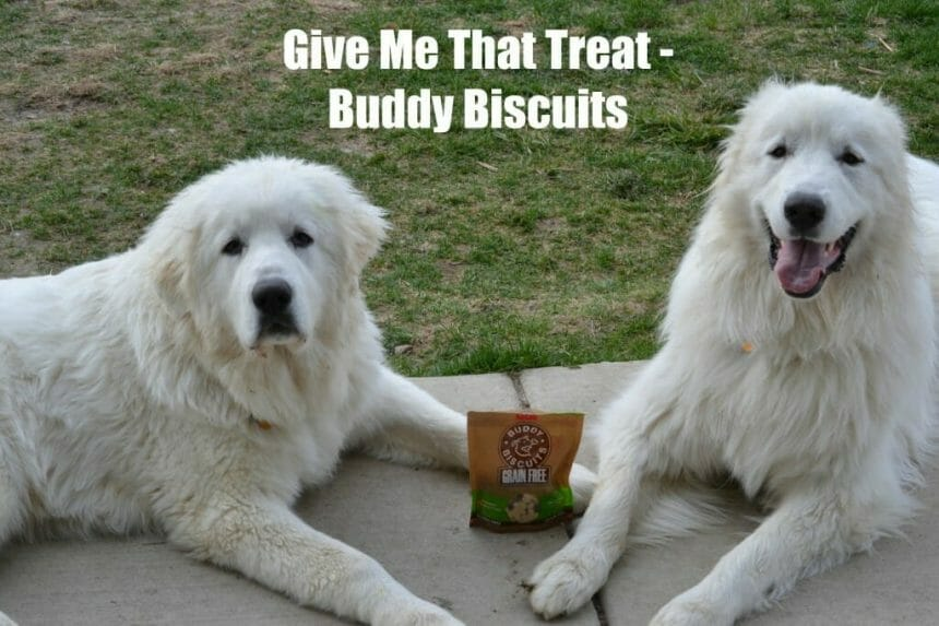 Give Me That Treat – Buddy Biscuits