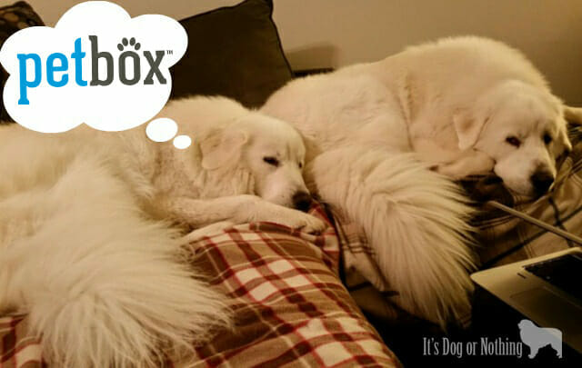 Great Pyrenees Love PetBox
