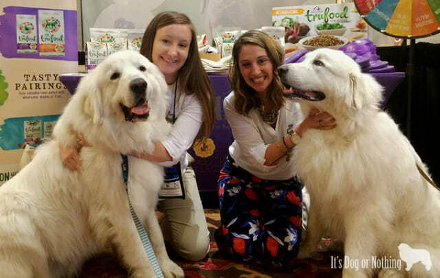 Great Pyrenees and Wellness Dog Food