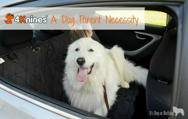 4Knines with Great Pyrenees