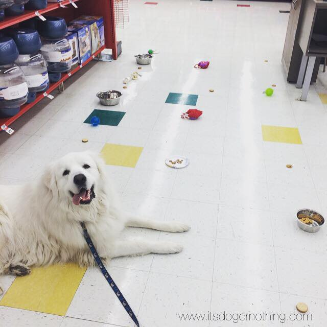 "We like to set up ""obstacle courses"" filled with toys, treats, and water (his biggest challenge!)."
