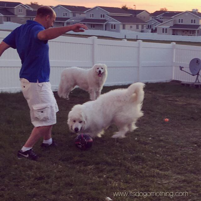 Great Pyrenees Soccer