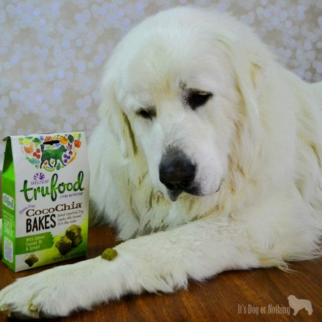 For me, #TruLoveIs is a Great Pyrenees. For Mauja and Atka, #TruLoveIs Wellness TruFood. TruFood gives pets more of what they need to be vibrant and happy.