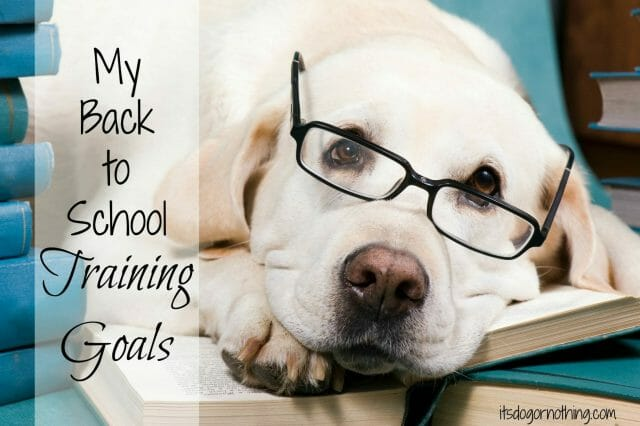Back to school time doesn't just have to be for the kids! Get your dogs involved with some positive reinforcement training.