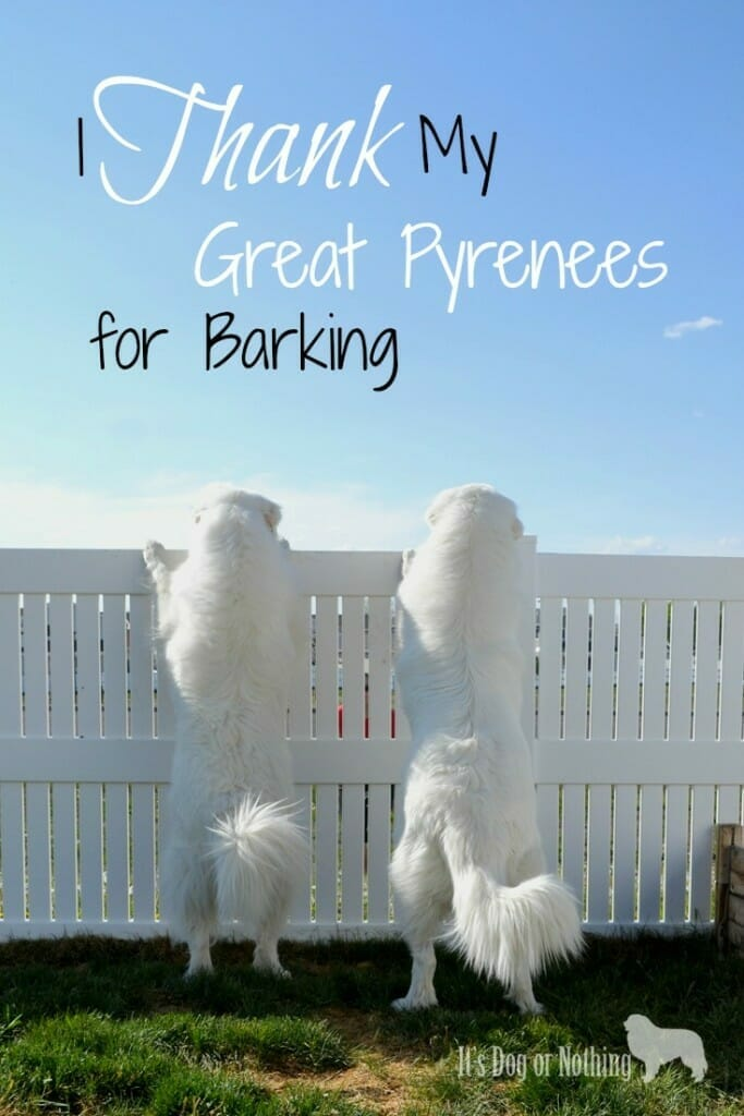 Yes, I thank my Great Pyrenees for barking. I swear I have a good reason.