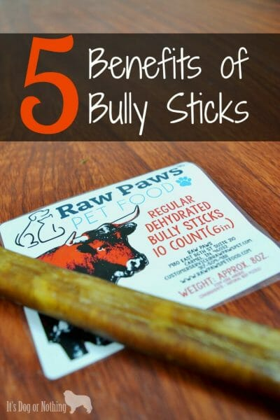 Bully sticks are a great treat for your dog and here are 5 reasons why!