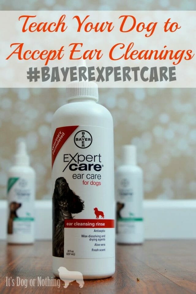 A guide for cleaning your dog's ears with the help of Bayer ExpertCare sold exclusively at PetSmart!