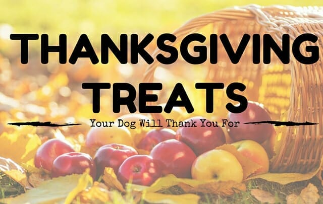 10 Thanksgiving Treats Your Dog Will Thank You For