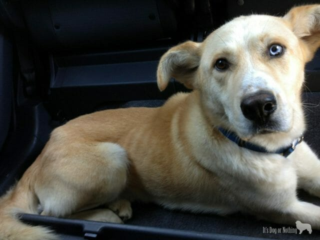 "Kaeto's ""Gotcha"" picture. In our car and leaving the shelter!"