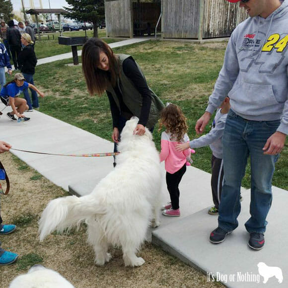 You might have a Great Pyrenees if you feel like a celebrity when you're out and about with your pyr. #celebridogs