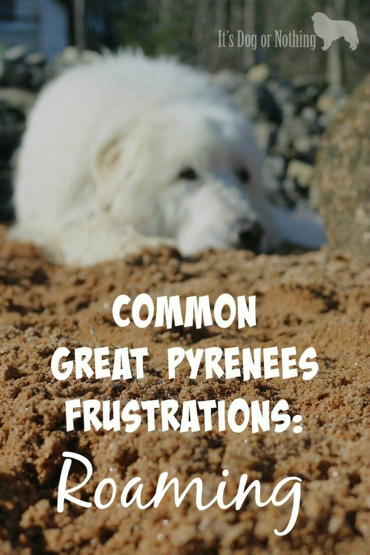 How To Prevent Great Pyrenees Roaming - It's Dog or Nothing