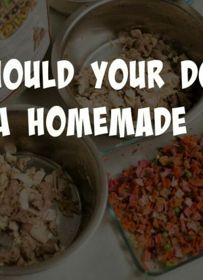Should Your Dog Try a Homemade Diet?