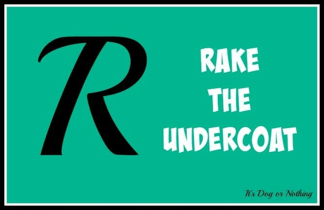 Rake the Undercoat [GIVEAWAY!]