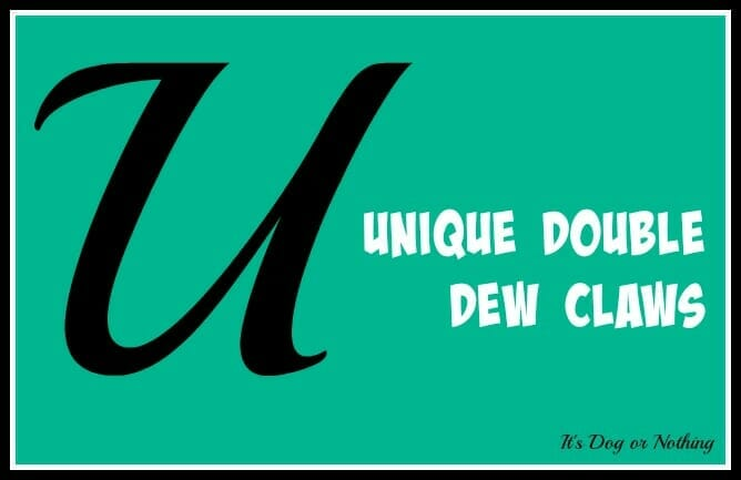 Unique Double Dew Claws