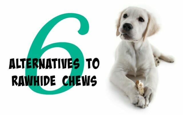 6 Alternatives to Rawhide Chews