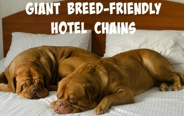 Giant Breed-Friendly Hotel Chains