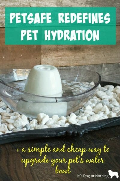 With far too many pets suffering from dehydration, especially during the summer months, we wanted to bring attention to National Pet Hydration Month. With the help of our pals over at PetSafe we were able to transform our mucky water bowl area to a beautiful home accent that even I want to drink out of!