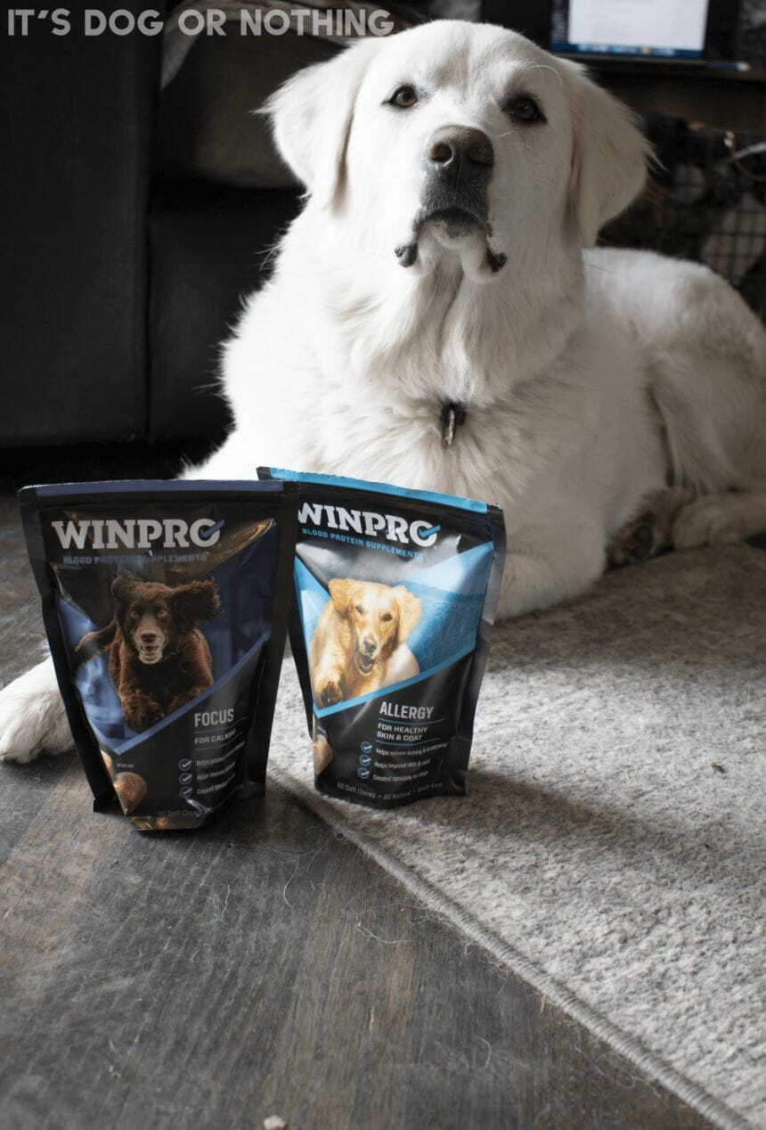 WINPRO Blood Protein Supplements for Dogs