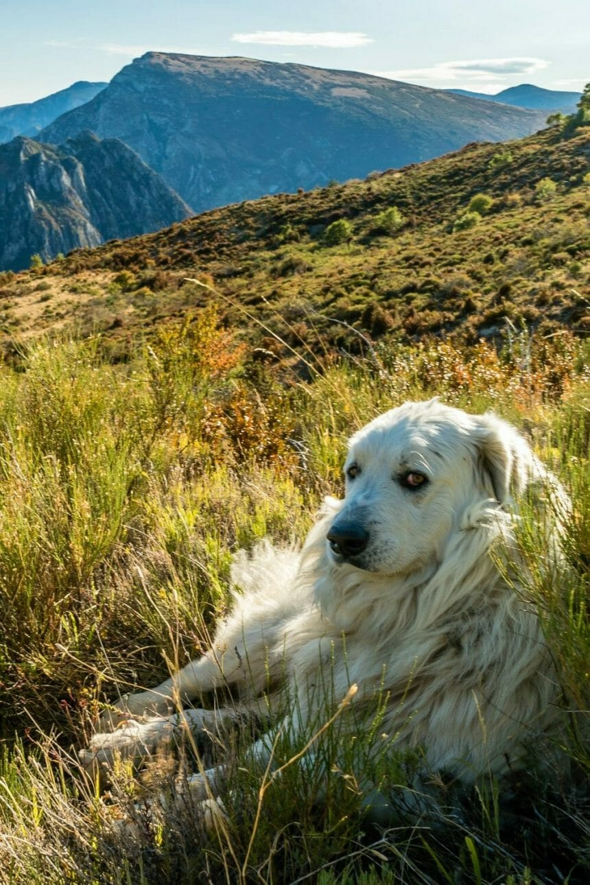 How to Earn the Trust of Fearful Dogs (and my foolproof treat)
